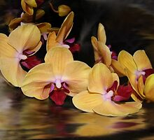 Orchid Reflection by WildestArt
