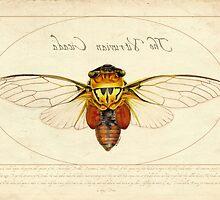 The Vitruvian Cicada by BernadetteD