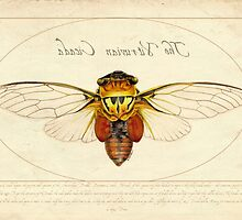 The Vitruvian Cicada by BernadetteD