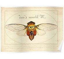 The Vitruvian Cicada Poster