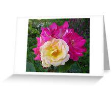 Bi-Coloured Rose Greeting Card