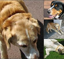 Friendly Canines Collage by BlueMoonRose