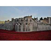 Poppies at the Tower of London - In the evening Photographic Print
