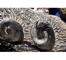 17FossilSpiralShell Photographic Print