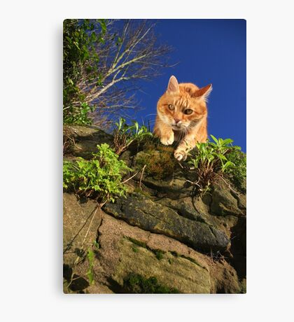 Mouse's-eye view Canvas Print