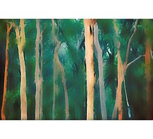 Abstract Australian misty Eucalyptus forest  Photographic Print