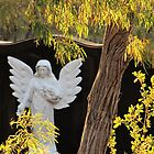 Karridale Cemetry - Angel in a Peppermint Tree     by tomcollins