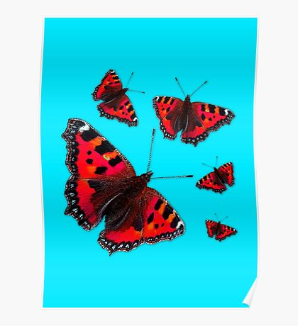 Admiral Butterfly #1 RED Poster