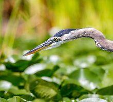 Fishing Rod -- Great Blue Heron by Tom Talbott
