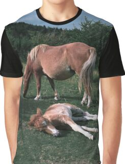 Wild Ponies on Mount Rogers Graphic T-Shirt