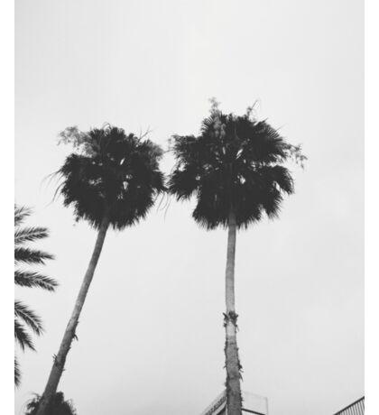Palm Trees in Jacksonville Sticker