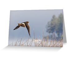 Harrier Hunting -- Northern Harrier Greeting Card