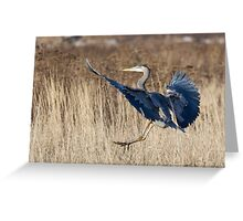 Great Blue Heron Landing Greeting Card