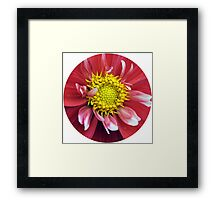 Red and Yellow Dahlia. Framed Print
