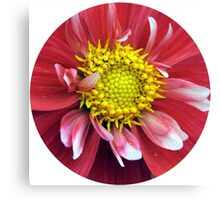 Red and Yellow Dahlia. Canvas Print