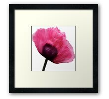 Pink Poppy. Framed Print