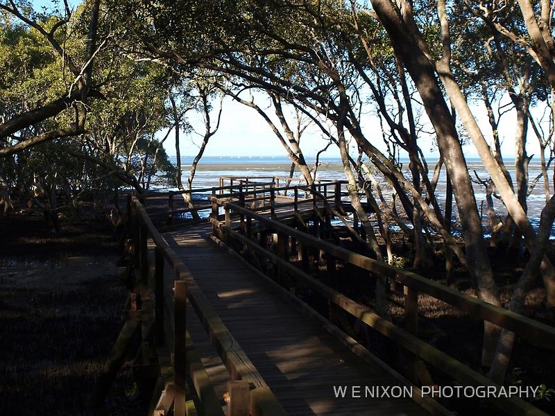 Wynnum North Mangrove Boardwalk by Wayne  Nixon  (W E NIXON PHOTOGRAPHY)
