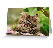 Cute Maine Coon Cat Kitten Photo Portrait Greeting Card