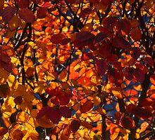 Sunny Autumn Patterns by Georgia Mizuleva
