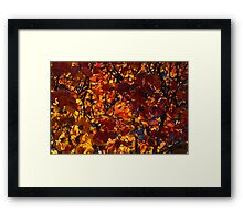 Sunny Autumn Patterns Framed Print