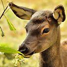 Portrait of a Young Elk by Karen Peron