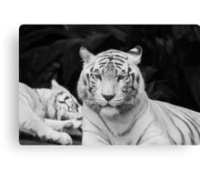 The White Prince Of Tigers Canvas Print