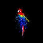 Beautiful Splash Parrot by Vidka Art