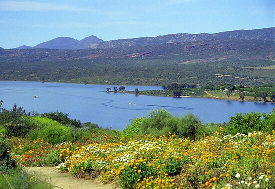 Clanwilliam Dam, Western Cape, South Africa by Bev Pascoe