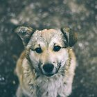 Puppy by Milan Surbatovic