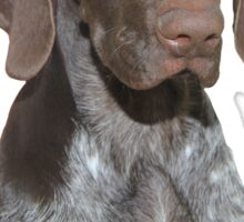 Glossy Grizzly German Shorthaired Pointer Dad Sticker