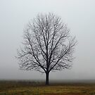 Lone Tree At High Noon by WildestArt