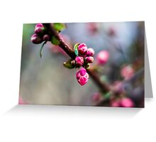 Cherry Almost Blossoms/Redmond Greeting Card