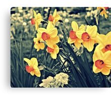 Flowers Botanic Nature Photography- Vintage Variation Canvas Print