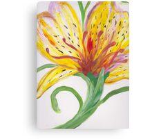 Yellow Peruvian Lily Canvas Print