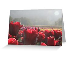 Tulip Morning - A field of tulips greet the morning Greeting Card