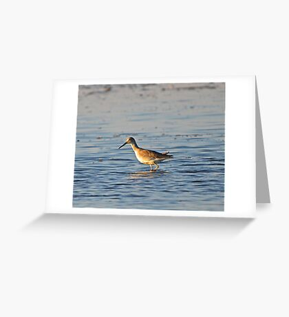 Early Morning Sandpiper Greeting Card