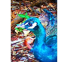 Surreal Blue Peacock Photographic Print