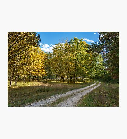 Road through forest Photographic Print