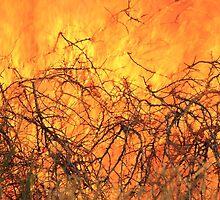 Yellow Flames - Wild Bush Fire by LivingWild