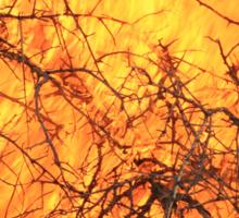 Yellow Flames - Wild Bush Fire Sticker
