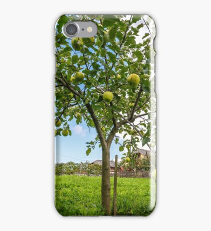 Delicious Golden apple trees iPhone Case/Skin