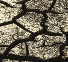 Parched Land - Clay Cracks and Nature Pattern Sticker