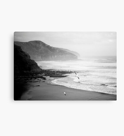 Gannets on Muriwai Beach. Canvas Print