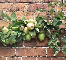 Apple Tree by LydiaBlonde