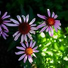 beauty in imperfection. by geof