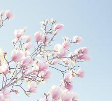 Pink magnolias by Jamesy (happypastel)