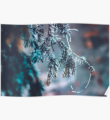 Frozen Pine Branches Poster