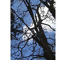 ***TREE/BLUE SKY Photographic Print