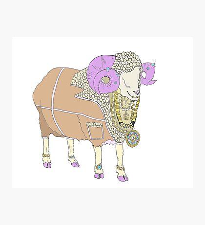 Rambling - Jewellery for Sheep Photographic Print