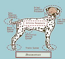 Originaldogco Dalmatian ANATOMY by Lisa Rotenberg